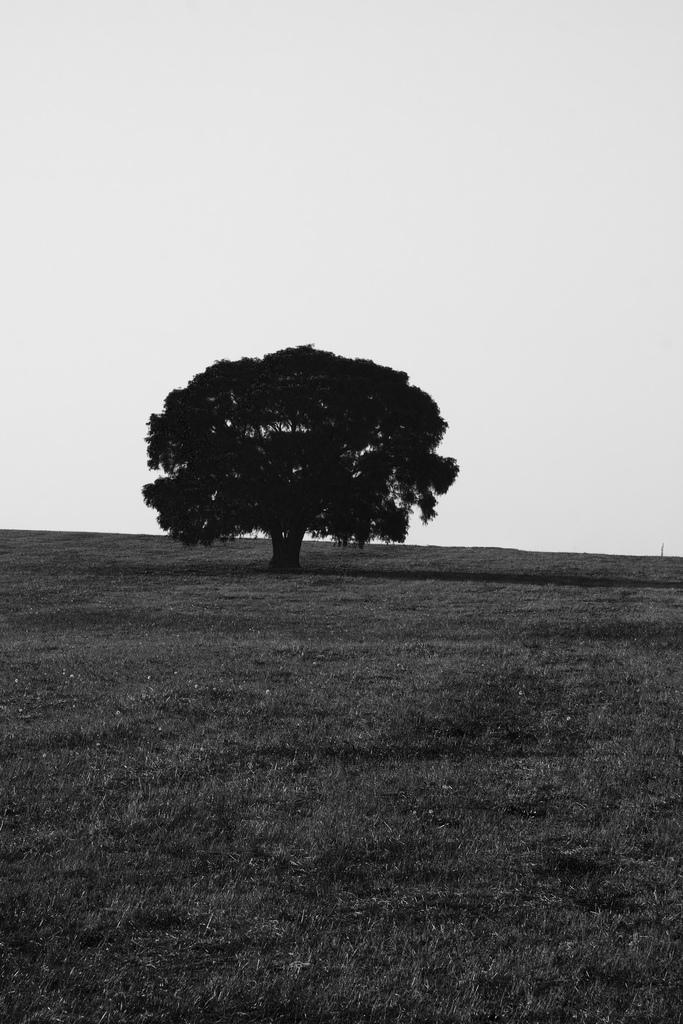 A tree on a hill near Northcliffe, Western Australia.