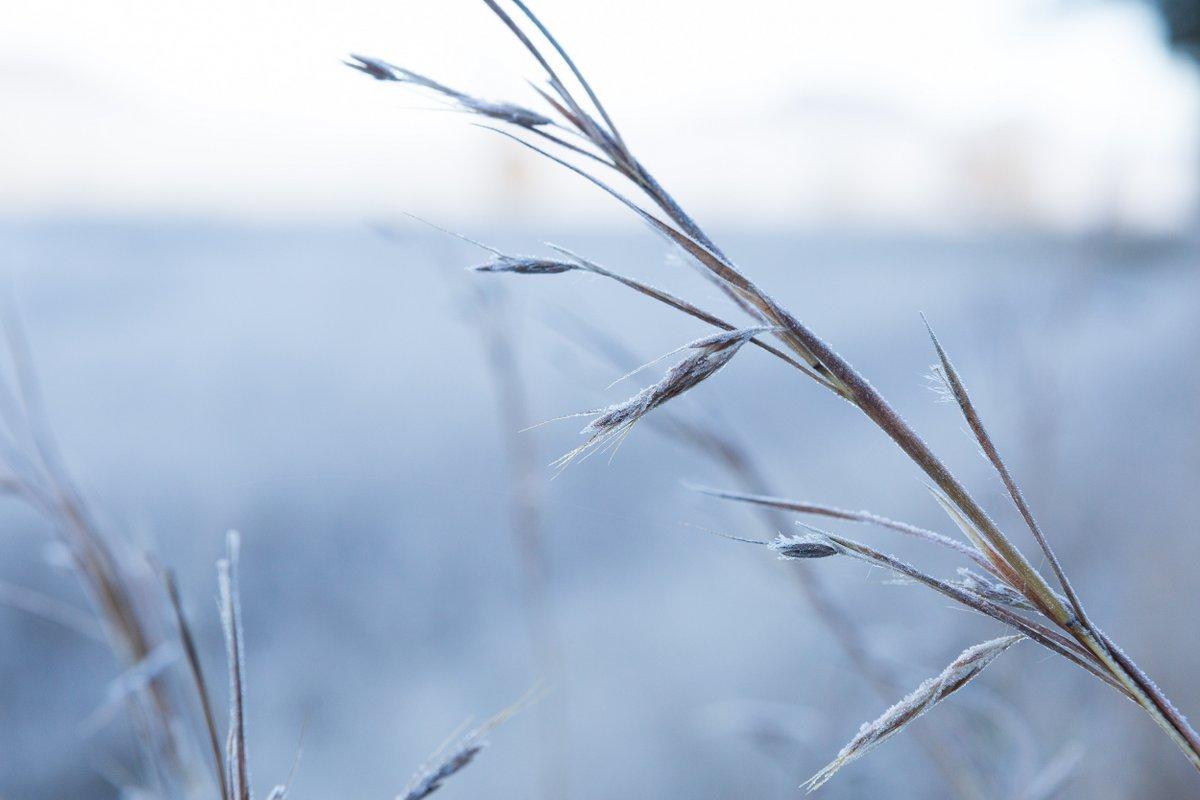 Moonbi Frost
