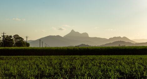 Wollumbin (Mount Warning) over cane fields in Murwillumbah NSW.